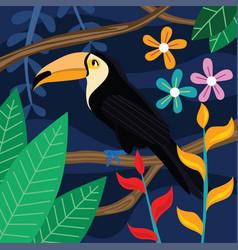 toucan bird in dark background vector image