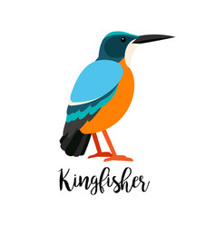 exotic tropical kingbisher bird vector image