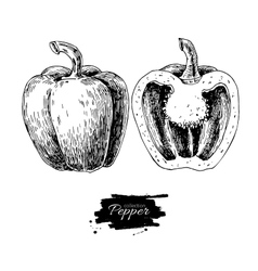 Pepper hand drawn Vegetable vector image
