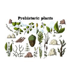 cartoon botanical rainforest set vector image