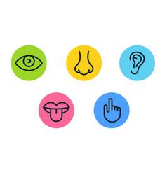 Five human senses vision eye smell nose hearing vector