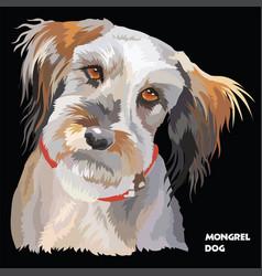 fluffy dog colorful portrait vector image