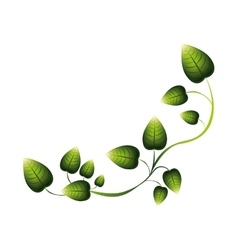Green creeper with multiple leaves vector