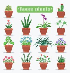 decorative room plants in clay pots vector image