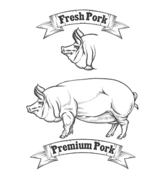 Premium pork meat label butcher emblems or vector image