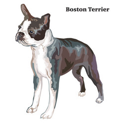 Colored decorative standing portrait of boston vector