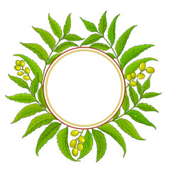 Neem branches frame on white background vector