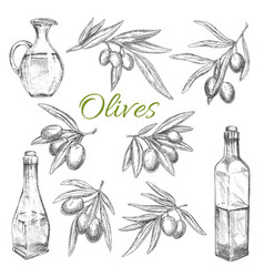 olives sketch icons of olive oil product vector image