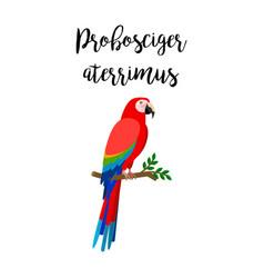 exotic tropical probosciger aterrimus bird vector image