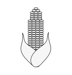 vegetable icon image vector image vector image