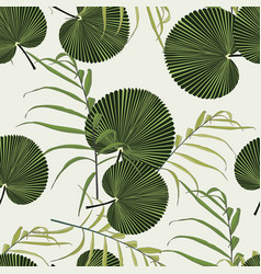 fan palm tropical leaves on light background vector image