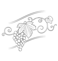 Grape vine branches ornament vector image