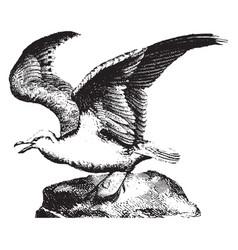 Gull vintage vector