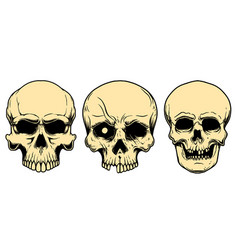 human skulls in engraving style design element vector image