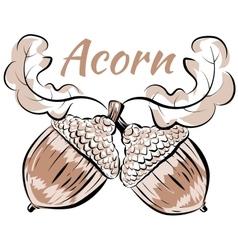 Oak branch two acorns vector