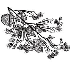 Linden vector image