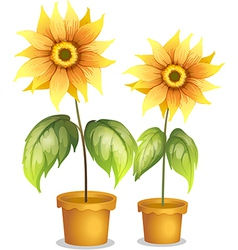 A flower plant in a pot vector image