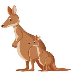 Cute kangaroos standing on white background vector