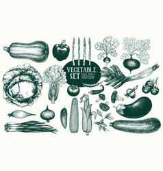 vegetables hand drawn set vector image