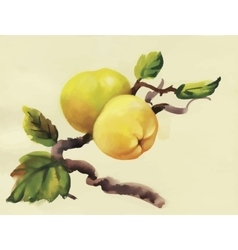 Watercolor apples painting on tree vector
