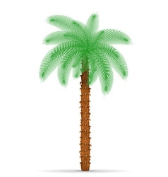 palm tree 03 vector image