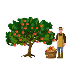 farmer picking off apples vector image