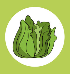 Lettuce healthy fresh image vector