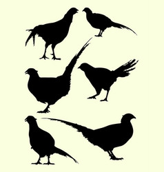 pheasant birds animal silhouette vector image