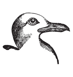 Small black backed gull vintage vector