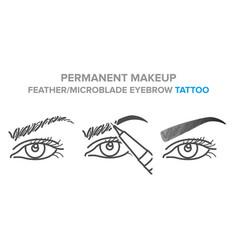 Eyebrow permanent makeup tattoo procedure vector