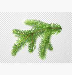 Fir branch christmas tree pine needles isolated vector
