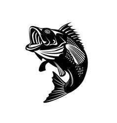 florida largemouth bass swimming up black and vector image