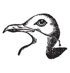 Herring gull vintage vector