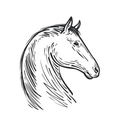 Horse sketch farm animal steed vector