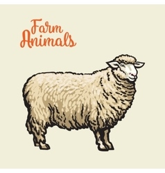 Image of sheep with black outline vector