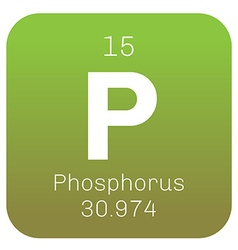Phosphorus chemical element vector