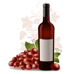 wine bottle and grape vector image vector image