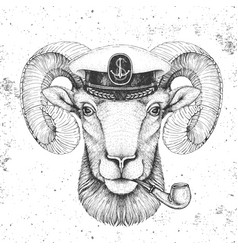 Animal ram or mouflon in captains cap and pipe vector
