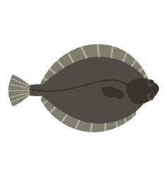 Flounder fish icon isolated vector