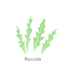 Ruccola leaves isolated on white background vector