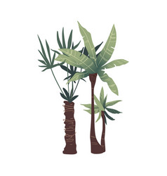 two tropical green palm trees with leaves vector image