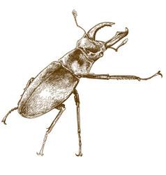 engraving of beetle deer vector image