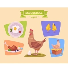 Farm animal and products made out of them Chiken vector image vector image