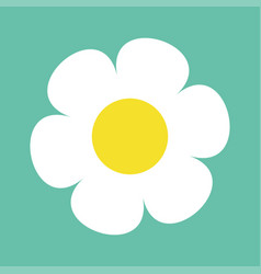 daisy chamomile cute flower plant collection vector image