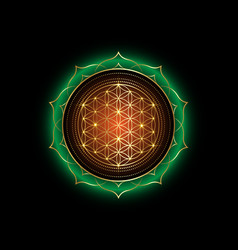 flower life yantra mandala in lotus flower vector image