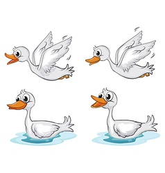 Four ducks vector image