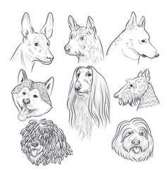 Purebred dog head sketch rare canine breeds vector