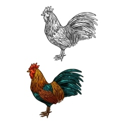 rooster cock sketch icon for christmas vector image