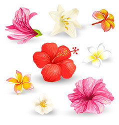 set tropical hibiscus vector image