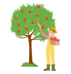 Woman picking apples isolated female character vector